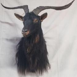 Alpine Goat Mount