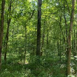 Wooded Hunting & Recreational Land