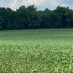 Quality Farmland in Warrick Co, IN