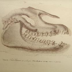 Rare Ancient Dinosaur Prints